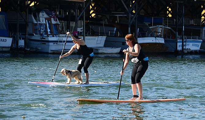 Stand up paddleboard racing with dog