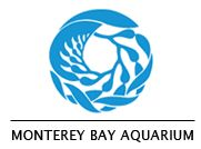 monterey bay aquarium paddleboard racing in McCovey Cove