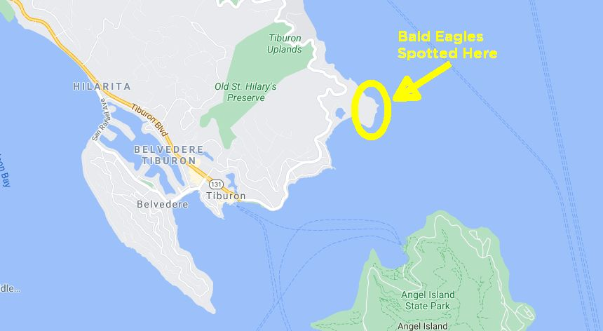 Map to see bald eagle in marin